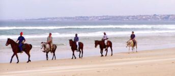 Seals Backpackers - Papiesfontein Beach Horse Rides1