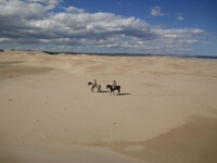 Seals Backpackers - Papiesfontein Beach Horse Rides10