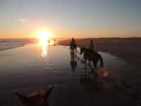 Seals Backpackers - Papiesfontein Beach Horse Rides11