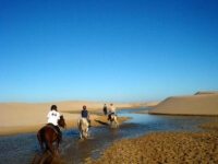 Seals Backpackers - Papiesfontein Beach Horse Rides3