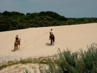 Seals Backpackers - Papiesfontein Beach Horse Rides4