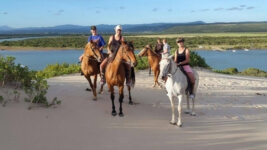 Seals Backpackers - Papiesfontein Beach Horse Rides5