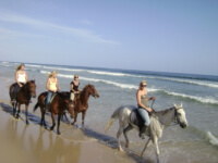 Seals Backpackers - Papiesfontein Beach Horse Rides6