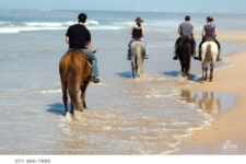 Seals Backpackers - Papiesfontein Beach Horse Rides7