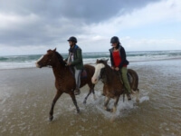 Seals Backpackers - Papiesfontein Beach Horse Rides8