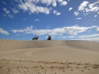 Seals Backpackers - Papiesfontein Beach Horse Rides9