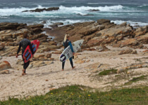 Seals Backpackers - Surfing5