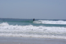 Seals Backpackers - Surfing6